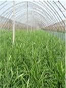 Quality 3% UV pp spunbond non woven fabric for gardening for sale