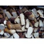 Quality Supply 2010 wild mushroom for sale