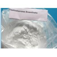 Quality White Powder Testosterone Enanthate CAS: 315-37-7 for Building Muscle, Burning Fat and Gaining Strength for sale