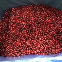 Quality BRC Certified Rich In Vitamin C 100% IQF Frozen Sweet Wild/Cultivated Lingonberry Cowberry From China for sale