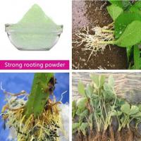 Quality Agrochemical promote rooting powder plant hormone strong rooting powder 98%TC for sale