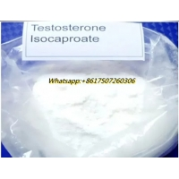 Quality 99% High Quality raw white powder Testosterone Isocaproate CAS:15262-86-9 giving males their specific sexual traits for sale