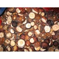 Quality Supply hot sale boletus fungus for sale