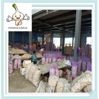 China chinese good garlic processed in our own factory for Ecuador buyers on sale