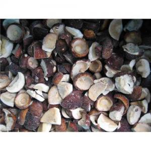 China Sell hot sale boltetus mushroom on sale