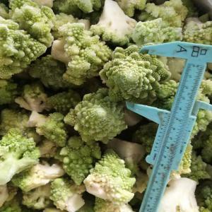 Quality OEM Premium Quality IQF Individually Quick Freezing Frozen Romanesco Florets Wholes / Cut Shape Optional for sale