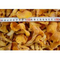 Quality Frozen cantharellus cibarius for sale