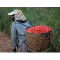 Quality 650 grains / 50g Thick Red Wolfberry Goji Berry Dried Sweet Taste SDG-R650 for sale