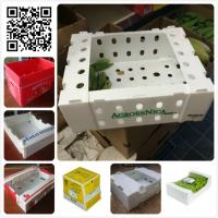 Quality 5kgs 10lbs pp corflute coroplast vegetable fruit packaging box for sale