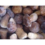 Quality Supply wild mushroom for sale