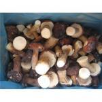 Quality Supply hot sale wild mushroom for sale