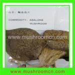 Quality Dried Abalone Mushroom for sale