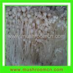 Quality Flammulina Velutipes for sale