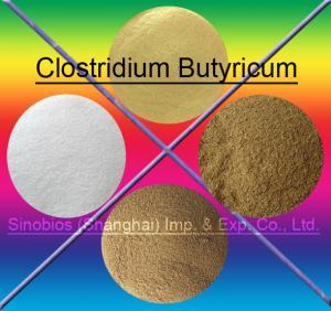 Quality Brown 10BI CFU/G Clostridium Butyricum Feed Probiotics For Animals SEM-CB10BI for sale