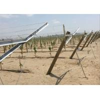 Hot Dipped Galvanized Metal Grape Vine Stakes Enables Sunlight Reach Make Grape Grow