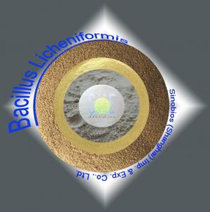 Quality 200BI Bacillus Licheniformis Powder Feed Grade Probiotics for Livestock / Poultry SEM-BL200BI for sale