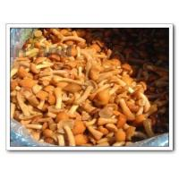 Quality Mushrooms,Nameko,Pholiota Nameko,Nameko Mushroom for sale