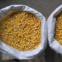 Quality FDA Certified IQF Frozen Vegetables/ Frozen Whole Kernel Sweet Corn For Supermarkets for sale
