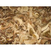 Quality Wild mushrooms for sale