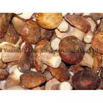 Quality Boletus mushrooms for sale