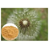 Quality Dandelion Root Plant Extract Powder Brown Color HPLC 5% Food Grade Anti - Aging for sale