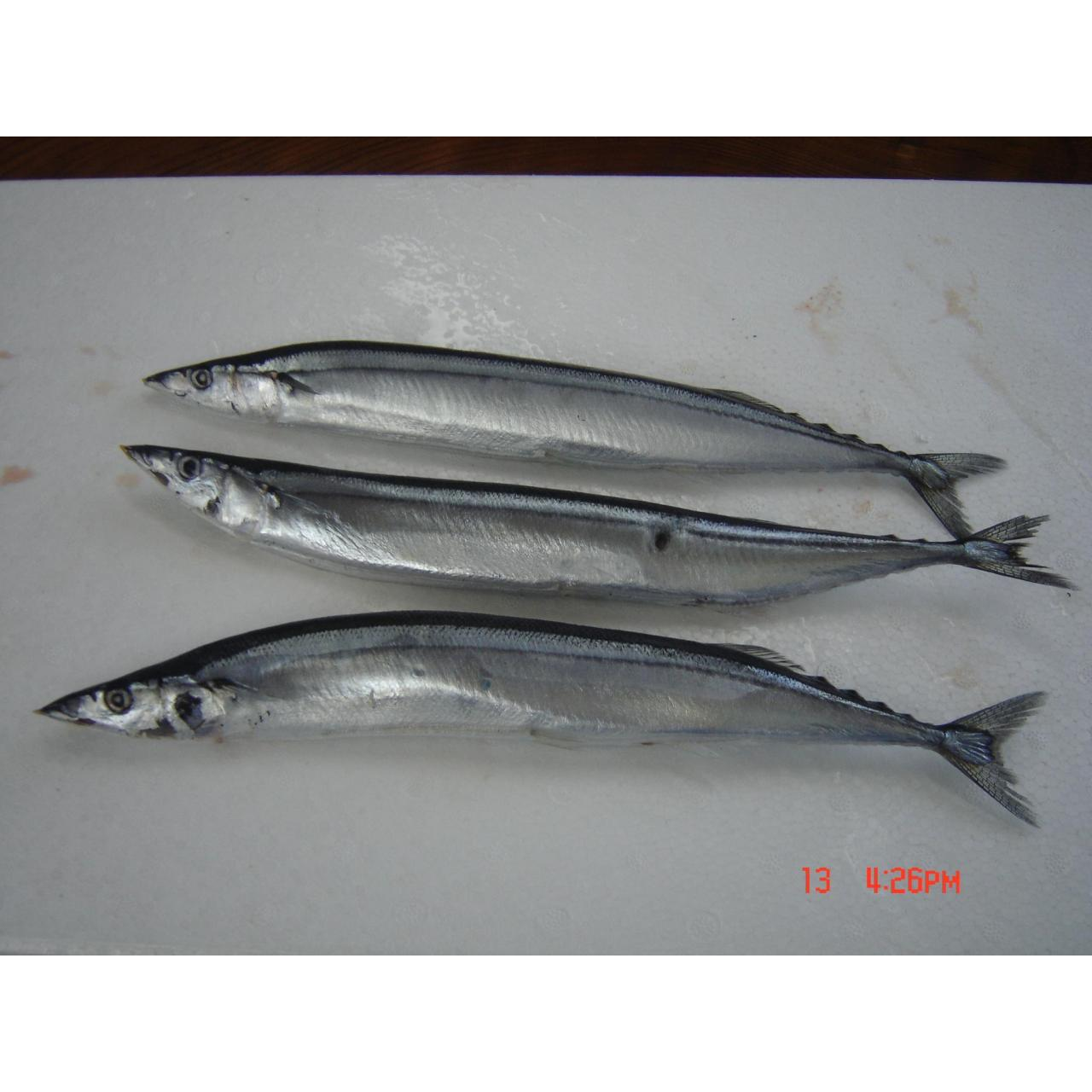 Quality Fish Pacific saury for sale