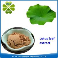 Lotus Leaf Extract Lose Weight Quickly Secret Fat Burner Nymphaea Lotus Leaf Extract Nuciferine