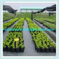 PP Weed control Cloth