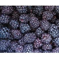 Buy cheap Frozen Fruits NAME: Frozen Blackberry from wholesalers