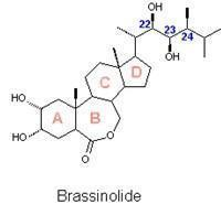 Buy cheap Agrochemicals Brassinolide90%min from wholesalers